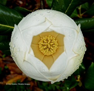 Staton Rose Garden